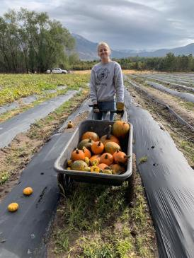 Farmers collect pumpkins for Provo Schools (UT).