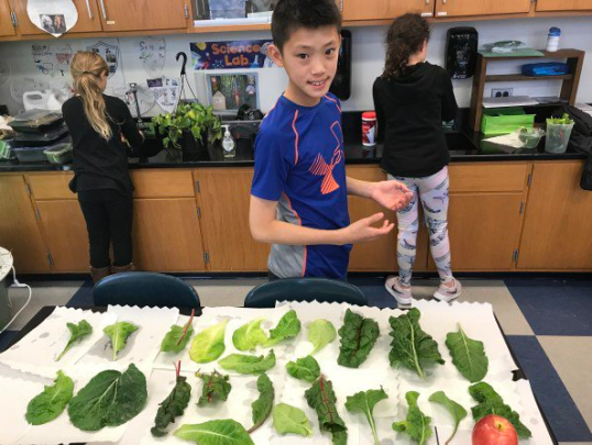 Students learn to identify certain vegetation by their leaves.